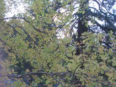 Autumn in Lake Shastina