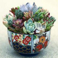 15 Amazing DIY Succulents in Teacups -Relaxwoman