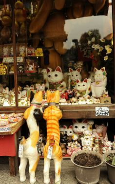 Adorable Maneki-Neko (lucky cat) souvenir shop in Kyoto, Japan. I saw one a lot like this when I was in Asakusa! Maneki Neko, All About Japan, Art Asiatique, Go To Japan, Turning Japanese, Japanese Culture, Japanese Art, China, Nihon