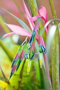 #Bromeliad #Flower