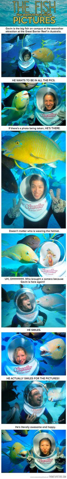 Photo bomb fish