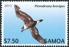 Collared Petrel stamps - mainly images - gallery format