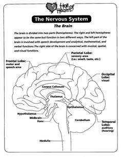 Christian Home School Hub Brain Nervous System