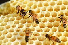 Mehiläisten, Rakennus Hunajakenno