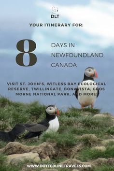 8 Days in Newfoundland Canada: St. Johns, Witless Bay Ecological Reserve, Twillingate, Bonavista, Gros Morne National Park and Newfoundland Canada, Newfoundland And Labrador, Newfoundland Island, Newfoundland Tourism, Newfoundland Recipes, L'anse Aux Meadows, Gros Morne, Voyage Canada, Canadian Travel