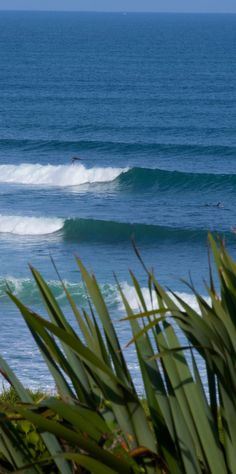 World top 10 surf spot - Whale Bay, near Raglan, New Zealand