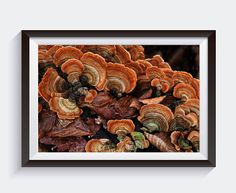 New Etsy listing, perfect for fall :) at https://www.etsy.com/listing/571548713/framable-photography-stunning-macro-of