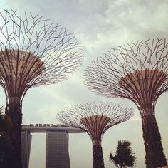 Finally here @ #Garden by the bay #singapore #tourism #park #sg #architecture #mbs #tourist #attraction #iphone4s #guosheng #guoshengz