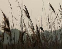 Wicken Fen, Cambridgeshire at Dawn   Flickr - Photo Sharing!