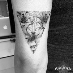 Hibiscus :