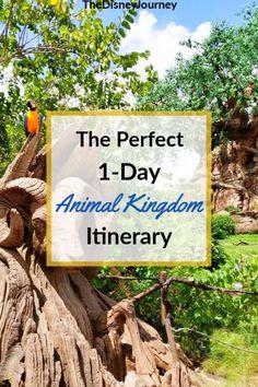 Animal Kingdom Touring Plan in 2020   Disney world vacation planning, Disney world parks, Animal kin