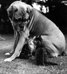 #cats #dog