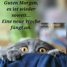 Wochenanfang Mehr Source by videos wallpaper cat cat memes cat videos cat memes cat quotes cats cats pictures cats videos Good Morning Funny, Good Morning World, Morning Humor, Good Morning Quotes, Funny Animal Quotes, Cat Quotes, Funny Animals, Funny Quotes, 9gag Funny