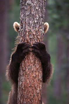 23 Animals Who Are Absolute Sh*t At Hide-And-Seek