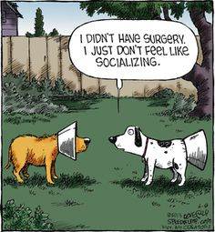 Funny pics, hilariousness, humour animal, jokes funny …For more funny pictures and hilarious humor visit cats Cats Funny Cute, The Funny, That's Hilarious, Funny Cartoons, Funny Memes, Cartoon Humor, Funny Comics, Funny Dogs, Funny Animals