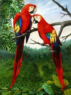 Paintings of Wild Animals By Amador        Amador is an artist from Argentina. He is a painter of the nature. He especially paints portraits of wild animals, in the forest of America or in the lands of Africa.