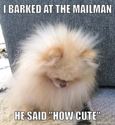 """I barked at the mailman .. he said """"How Cute"""""""