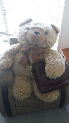 Teddy getting ready for work.