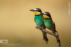 Two of us by thewexplorer. Please Like http://fb.me/go4photos and Follow @go4fotos Thank You. :-)