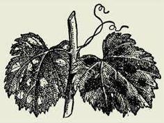 Afbeeldingsresultaat voor illustrations farmers working on vineyards
