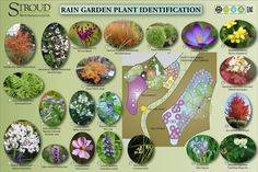 Rain Garden Plants Educational Signage