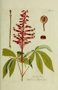 Bd.1 (1792) - Österreichs allgemeine baumzucht, : - Biodiversity Heritage Library