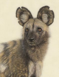 Art of Pamela Preller  ... African Wild Dog - (painted dog) highly endangered