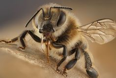 Bee Photo by Luciano Richino — National Geographic Your Shot