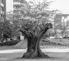 Plaza Felipe II