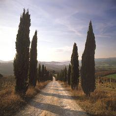 Mensano, Tuscany, Ital