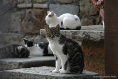 Gatti di Bagnoregio |