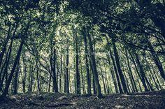 Trees in Wepre Park on Deeside in Wales