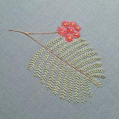 Mimosa sprig