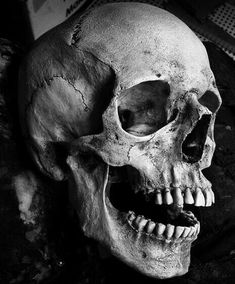 Human Skull | pinned by www.lamortclothing.com