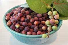 Authentic Florida - Authentic Florida Sea Grape Jelly