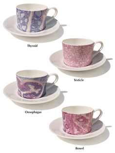 "Image of Histology Cup and Saucer. My first thought was ""ewwww, who would want histology on a teacup?"" and my second thought was- ""a testicle teacup! That's actually kind of hilarious..."""
