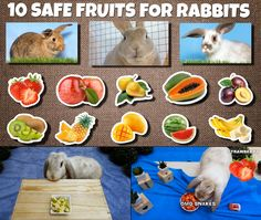 Here is a list of 10 fruits that you safely can give to your rabbit as a treat now and then. Tried out by my own Bunbun Rabbit Gif, Rabbit Eating, Fruit List, Bunny Care, Rabbits, Beaded Earrings, Treats, Canning, Animal
