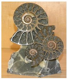 Ammonite sculpture - Volga River, Russia - Naturally Pyritized Fossil. This beautiful piece is a natural fossil, sliced in half and placed on natural matrix to display the beautiful golden colors of the mineral pyrite that formed the fossil.