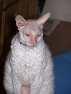 """Ratty.  """"The ugliest cat in Christendom"""" and I bet possibly Islam, but he was very loved and missed since he passed."""