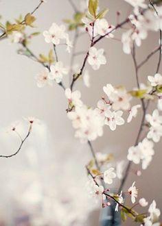 Summer White Floral Inspiration