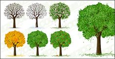 Trees at Four Seasons