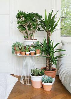 De 9 leukste planten voor in je interieur vind je op Woonblog!