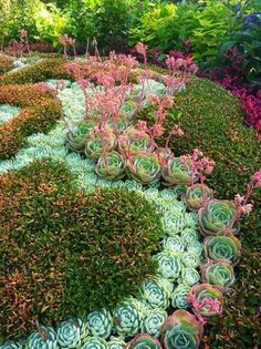 Easy Desert Landscaping Tips That Will Help You Design A Beautiful Yard Succulent Landscaping, Succulent Gardening, Planting Succulents, Backyard Landscaping, Landscaping Ideas, Succulent Garden Ideas, Gardening Hacks, Organic Gardening, Amazing Gardens