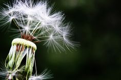 ¿Qué es la inmunoterapia y cómo ayuda a combatir las alergias?