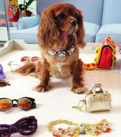 World's Most Fashionable Dog