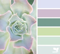 Succulent Hues - https://www.design-seeds.com/in-nature/succulents/succulent-hues-21