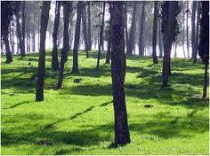 El bosque caducifolio se caracteriza por tener abundantes precipitaciones, y bien distribuidas a lo largo del año, con sus 4 estaciones bien definidas.