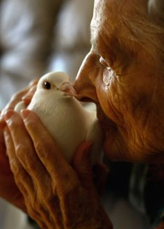 Terminally ill patient Jackie Beattie, 83, holds a dove on October 7, 2009 while at the Hospice of Saint John in Lakewood, Colorado. The dove releases are part of an animal therapy program designed to increase happiness, decrease loneliness and calm terminally ill patients during the last stage of life.