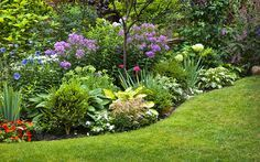 curved-herbaceous-border-with-evergreens-and-perennials How to create a herbaceous border on a budget