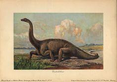 Diplodocus from Heinrich Harder's Tiere der Urwelt, (Animals of the Prehistoric World), 1912.
